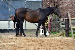 Przygotowywać jej konia Fotografia Royalty Free