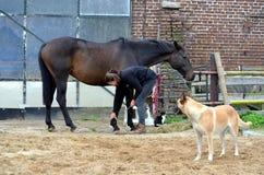 Przygotowywać jej konia Zdjęcie Royalty Free