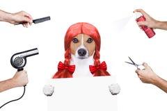 Przygotowywać psa przy fryzjerami Zdjęcia Royalty Free