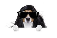 Przygotowywać psa przy fryzjerami Zdjęcie Royalty Free
