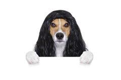 Przygotowywać psa przy fryzjerami Fotografia Royalty Free
