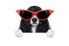 Przygotowywać psa przy fryzjerami Obrazy Stock