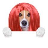 Przygotowywać psa przy fryzjerami Obrazy Royalty Free