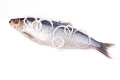 przygotowywająca kucharz ryba Zdjęcia Royalty Free