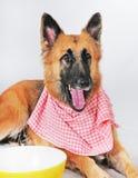 przygotowywający gość restauracji pies Fotografia Royalty Free