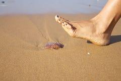Przygotowywający pchać meduzę Zdjęcie Stock