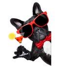 Przyjęcie koktajlowe pies Fotografia Stock