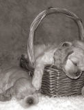 przyjęcie szczeniaka sen fotografia royalty free