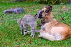 Przyjaźń bezdomny kot i pies Zdjęcia Royalty Free