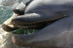 przyjaciele delfinów Zdjęcia Stock