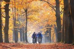 Przyjaciele jeździć na rowerze w lesie w jesieni Fotografia Royalty Free