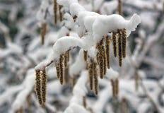 Przyjazd zima śnieg Na śniegów dryfach śnieg Obraz Stock