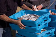przyjazdu ryba port Obrazy Stock