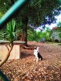 przykuwający pies obrazy stock