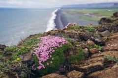 Przylądek Dyrholaey w Iceland obraz royalty free