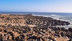 Przylądek Futerkowe foki przy przylądka krzyża foki rezerwą w Namibia Obraz Royalty Free