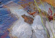 Przylądek rzeki żaba zdjęcia royalty free