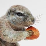 Przylądek Squirrrel ilustracji