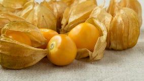 Przylądków agresty lub pęcherzycy owoc zdjęcie royalty free