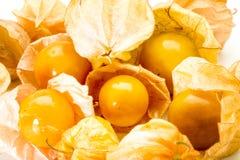 Przylądka agrest, pęcherzyc owoc zamknięty up Fotografia Royalty Free