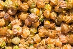 Przylądka agresta owoc Świeże przylądka agresta owocowe jagody a Zdjęcie Stock