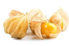 Przylądka agresta pęcherzycy owoc Fotografia Stock