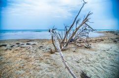 Przylądka Hatteras Krajowy Seashore na Hatteras wyspy północy Carolin fotografia royalty free
