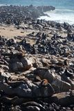 Przylądka krzyża foki rezerwa namibia brzegowy kościec Obrazy Stock