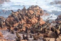 Przylądek futerkowej foki kolonia Obraz Stock