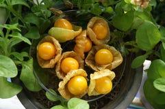 Przylądka agresta owoc Zdjęcia Royalty Free