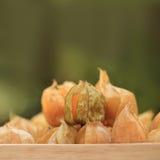 Przylądka agresta owoc, brown jesieni uprawy na zamazanym zielonym tle Obraz Royalty Free