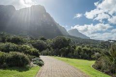 Przylądka miasteczka ogród botaniczny Zdjęcie Stock