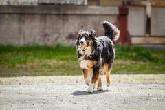 Przynosi psiego bieg zdjęcie stock