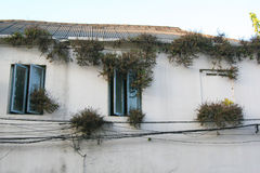 Przypadkowe rośliny Zdjęcie Royalty Free