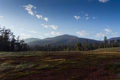 Przypieczeni wzgórza wokoło Marysville, Australia Zdjęcie Stock