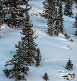 Przyroda ślada Przez Nieskazitelnego śniegu Zdjęcie Royalty Free