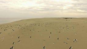 Przyroda Curonian mierzeja zdjęcie wideo