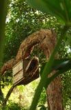 Przyroda gniazduje pudełko w drzewie Fotografia Stock