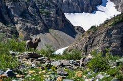 przyroda jak widziane w lodowa parka narodowego, Montana, usa Obraz Stock