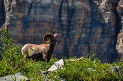 przyroda jak widziane w lodowa parka narodowego, Montana, usa Obraz Royalty Free