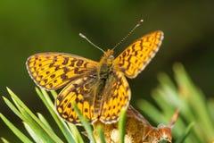 przyroda macrocosm piękne owady Pluskwy, pająki, motyle i inni piękni insekty, obrazy stock