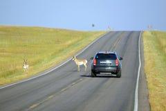 Przyroda na drodze obrazy royalty free