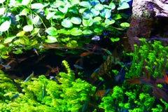 Przyroda przy akwarium Dubaj zdjęcia stock