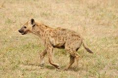 Przyroda w Afryka Obrazy Royalty Free