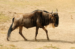 Przyroda w Afryka Zdjęcia Royalty Free