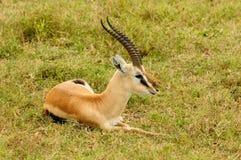 Przyroda w Afryka Obrazy Stock