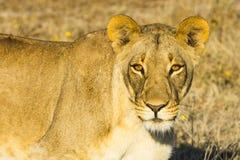 Przyroda w Nxai niecki parku narodowym obraz stock