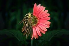 Przyrodni żywy i przyrodni nieboszczyk zdjęcie royalty free