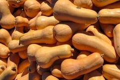 Przyrodni Butternut kabaczek Zdjęcia Stock