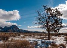 Przyrodni Nieżywy Utah Cedrowy jałowiec w pustynnej zimie Zdjęcia Royalty Free